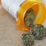New Study: Prescribed Marijuana May Stop HIV From Spreading